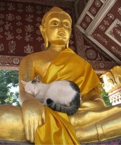 The position of the soul in Buddhism